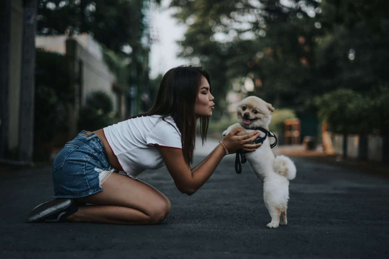 "OCTOBER 21, 2018 Millennial Marketing Insight from HypeLife Brands: ""Millennials Boost Spending on Beloved Pets"""